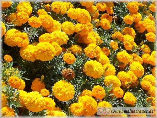 Trauer-Blumen_0012
