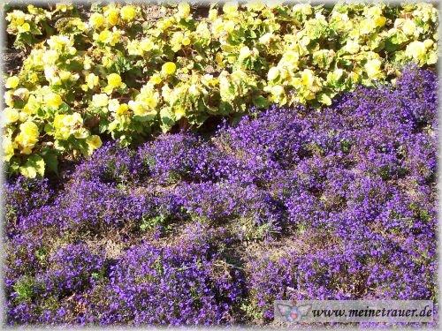 Trauer-Blumen_0020