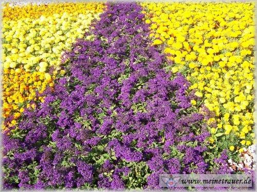 Trauer-Blumen_0025
