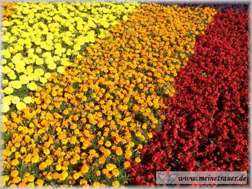 Trauer-Blumen_0028