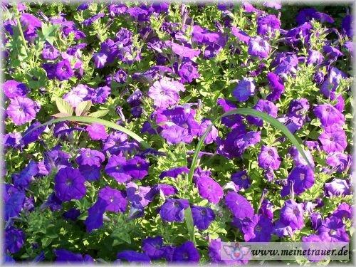 Trauer-Blumen_0032