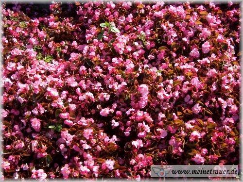 Trauer-Blumen_0041