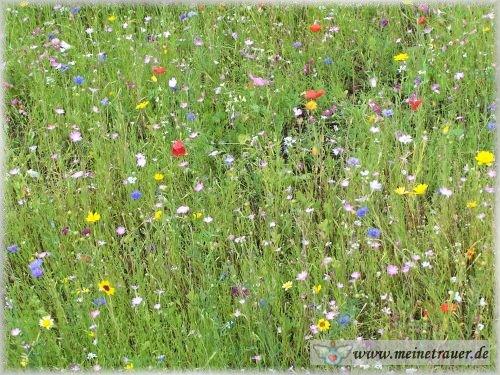 Trauer-Blumen_0051