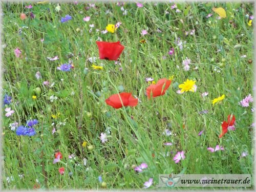 Trauer-Blumen_0054