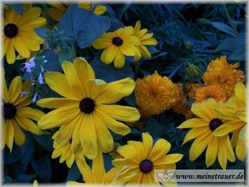 Trauer-Blumen_0058