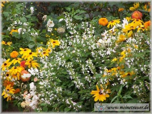 Trauer-Blumen_0057