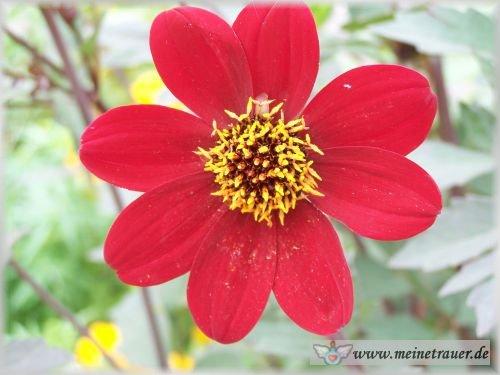 Trauer-Blumen_0062