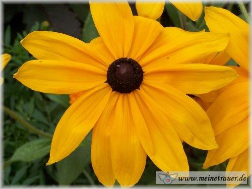 Trauer-Blumen_0067