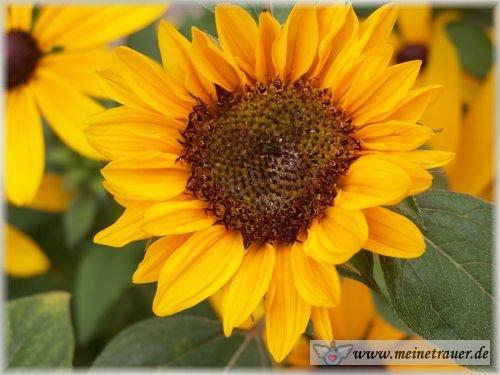 Trauer-Blumen_0065