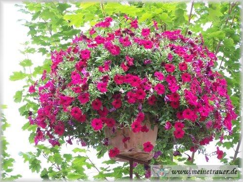 Trauer-Blumen_0075