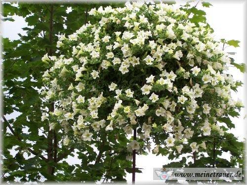Trauer-Blumen_0076
