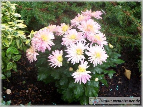 Trauer-Blumen_0101
