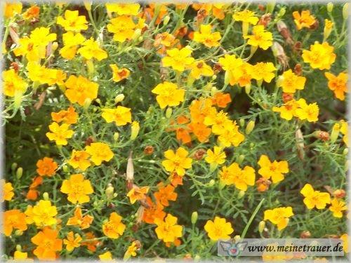 Trauer-Blumen_0091