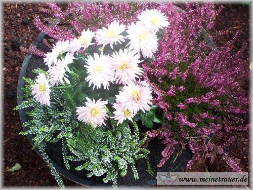 Trauer-Blumen_0099
