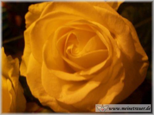 Trauer-Blumen_0115