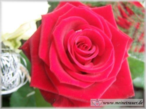 Trauer-Blumen_0123