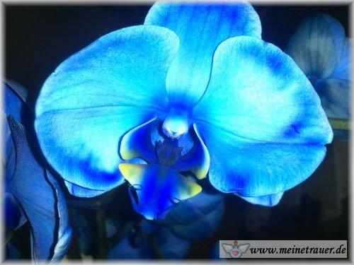 Trauer-Blumen_0152