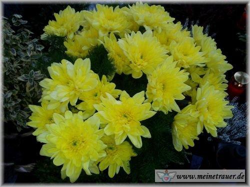 Trauer-Blumen_0132
