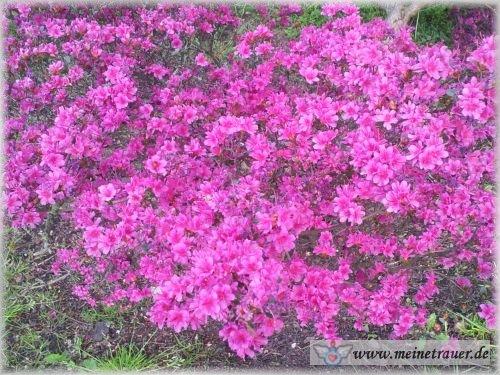 Trauer-Blumen_0137