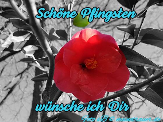 pfingsten_karten_1008_600x450
