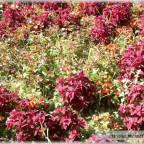 Trauer-Blumen_0034