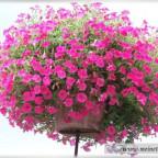 Trauer-Blumen_0073