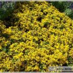 Trauer-Blumen_0009