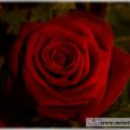 Trauer-Blumen_0118