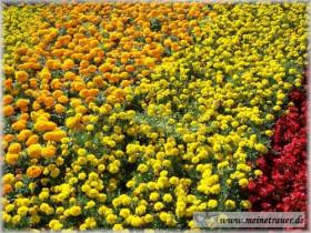 Trauer-Blumen_0023