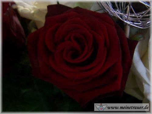 Trauer-Blumen_0113