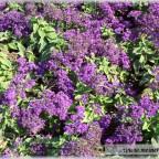 Trauer-Blumen_0019