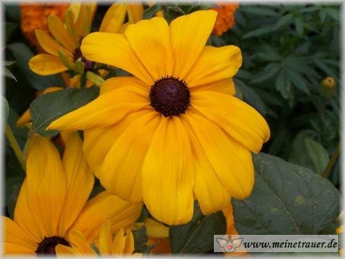 Trauer-Blumen_0066