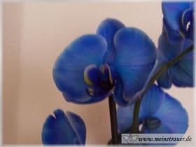 Trauer-Blumen_0129