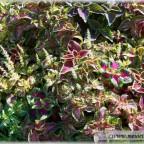 Trauer-Blumen_0042