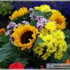 Trauer-Blumen_0005