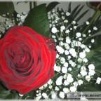 Trauer-Blumen_0150