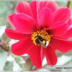 Trauer-Blumen_0081