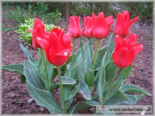 Trauer-Blumen_0114