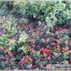 Trauer-Blumen_0131
