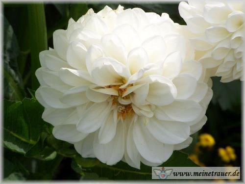Trauer-Blumen_0088