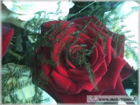 Trauer-Blumen_0146
