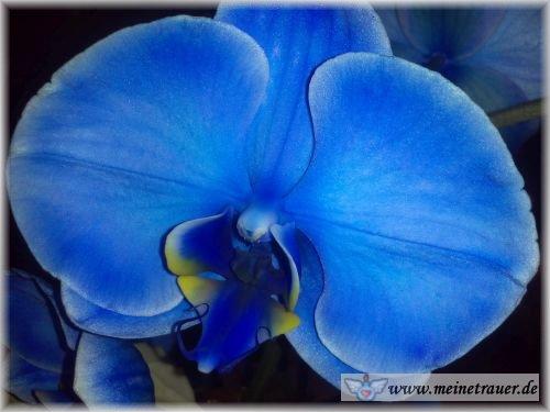 Trauer-Blumen_0153