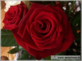 Trauer-Blumen_0128
