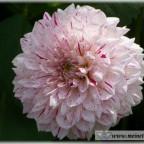 Trauer-Blumen_0089