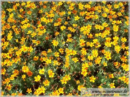 Trauer-Blumen_0017