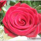 Trauer-Blumen_0122