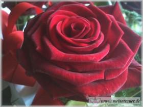 Trauer-Blumen_0147