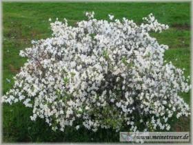Trauer-Blumen_0134