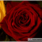 Trauer-Blumen_0116