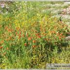 Trauer-Blumen_0038